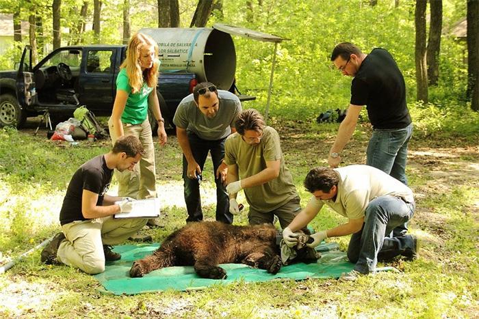 Poveste ursului cu 5 picioare